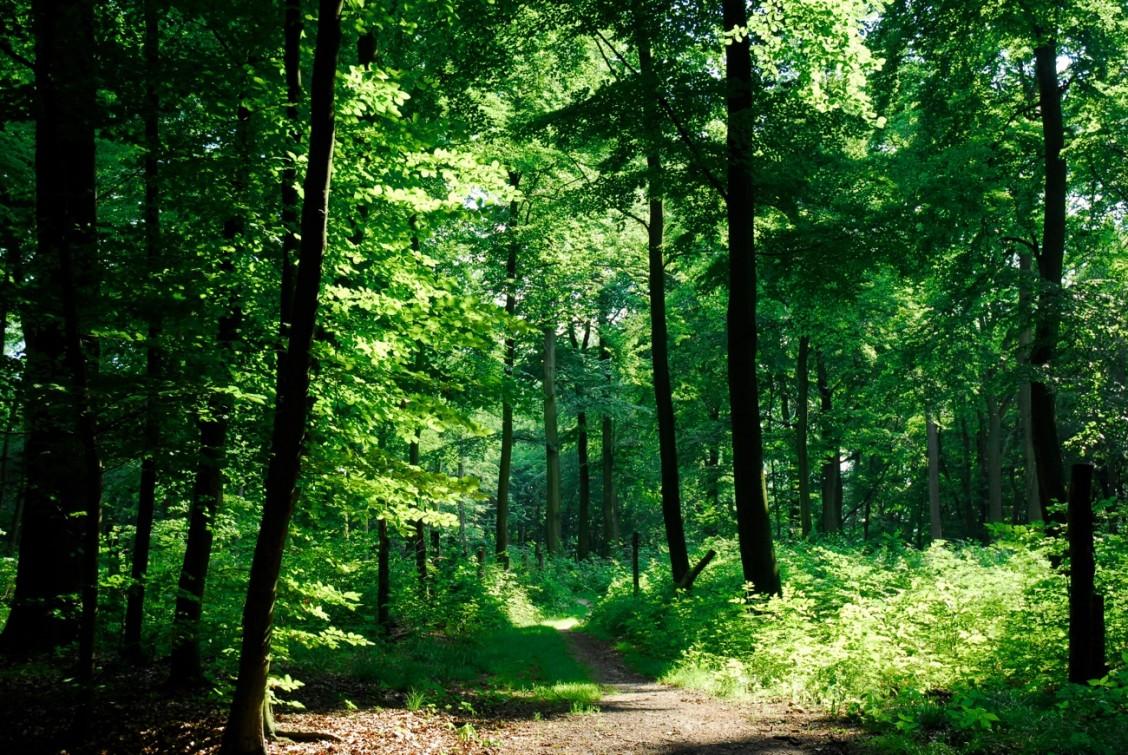Las taki piękny
